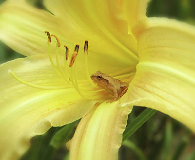 Photograph - Daylily Frog - Side View by MTBobbins Photography