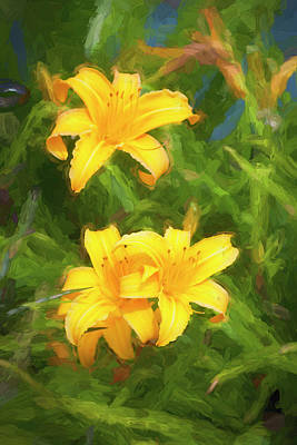 Photograph - Daylily Hemerocallis Stella De Oro 002 by Rich Franco