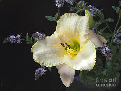 Photograph - Daylily In My Garden by Ann Jacobson