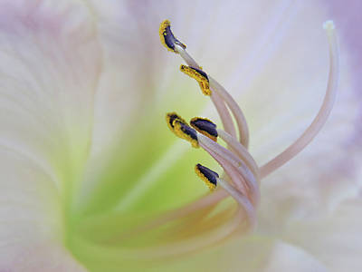 Photograph - Daylily Macro by David and Carol Kelly