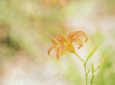 Photograph - Daylily by Wade Brooks