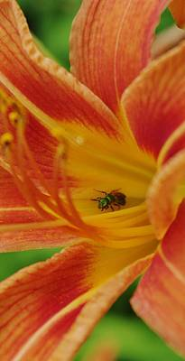 Photograph - Daylily With A Green Ant by Lori Kingston