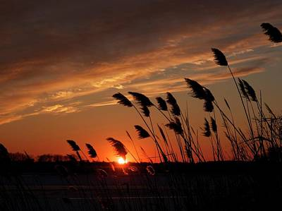Photograph - Days End by Patricia McKay