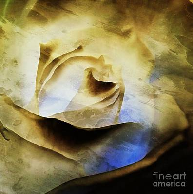 Days Go By - Rose - Dreamscape Art Print by Janine Riley
