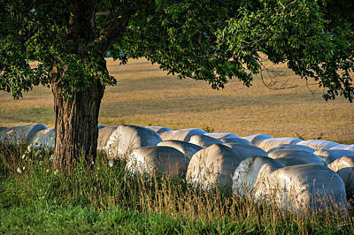 Photograph - Days Harvest by Doug Gibbons
