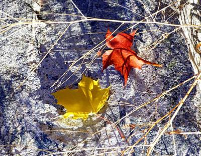 Photograph - Days Of Autumn 5 by Will Borden