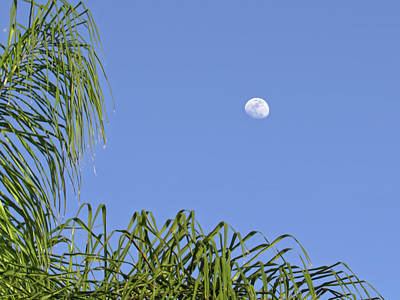 Art History Meets Fashion Rights Managed Images - Daytime Moon Against Clear Blue Sky in Tropical Florida Royalty-Free Image by Jill Nightingale