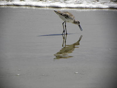 Photograph - Daytona Beach Shorebird by Chris Mercer