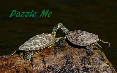 Photograph - Dazzle Me - Valentines Day by Debbie Oppermann