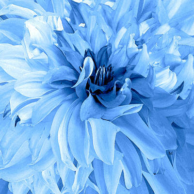 Photograph - Dazzling Blue Dahlia by Michele Avanti