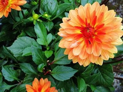 Photograph - Dahlia Among The Greens by Rosita Larsson