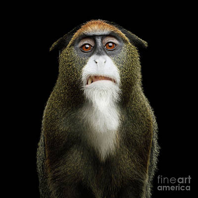 Photograph - De Brazza's Monkey Hater by Sergey Taran