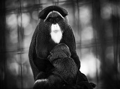 De Brazza's Monkey Art Print