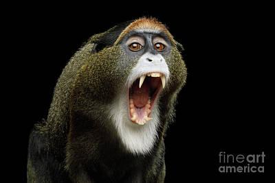 Photograph - De Brazza's Monkey Yawn by Sergey Taran
