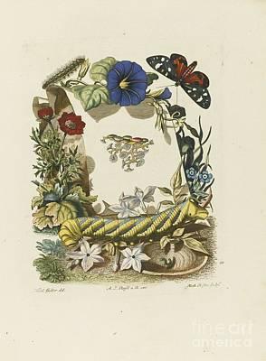 De Natuurlyke Historie Der Insecten Art Print