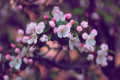 Photograph - Sunset Blossom by Jessica Jenney