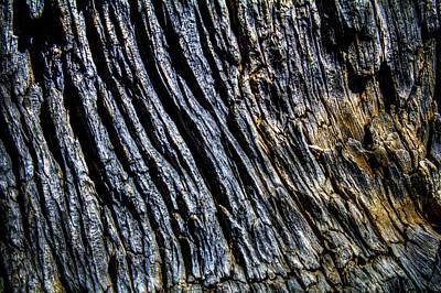 Photograph - Dead Ancient Bristlecone Pine Trunk Detail by Roger Passman