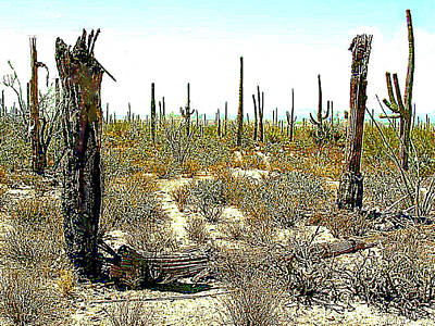 Photograph - Dead And Dying Saguara Cactus In Arizona Desert by Merton Allen