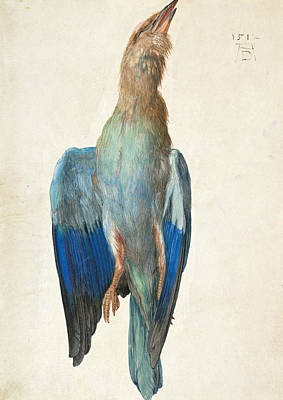 16th Century Painting - Dead Blue Roller by Albrecht Durer