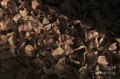 Dead Bougainvillea Flowers. Sepia Digital Art Art Print