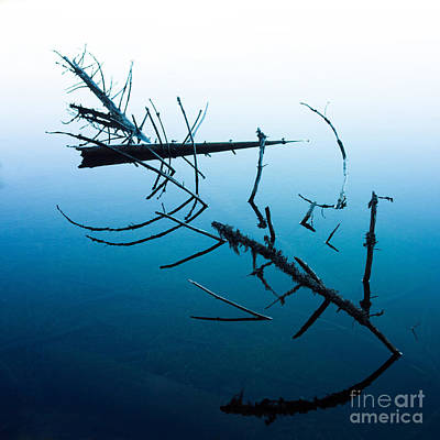 Dead Branches Into A Lake Art Print by Bernard Jaubert