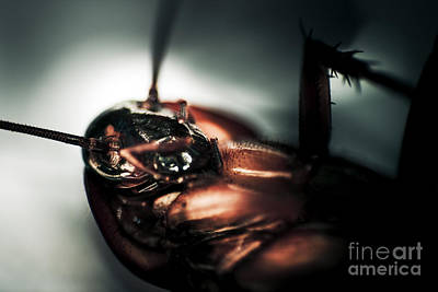 Stiff Photograph - Dead Cockroach by Jorgo Photography - Wall Art Gallery
