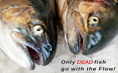Performance Mixed Media - Dead Fish .... Go With The Flow by Daniel Hagerman