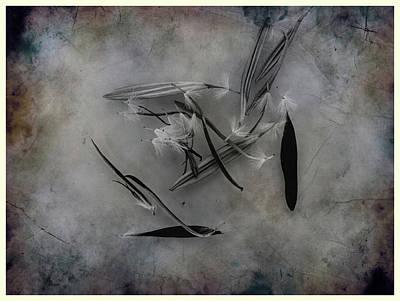 Photograph - Dead Flower by Hugh Smith
