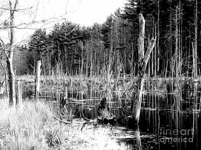 Photograph - Dead Forest by Marcia Lee Jones