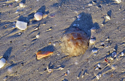 Photograph - Dead Jellyfish by Larah McElroy