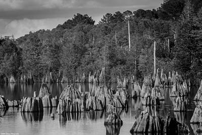 Photograph - Dead Lakes Cypress Stumps Bw  by Debra Forand
