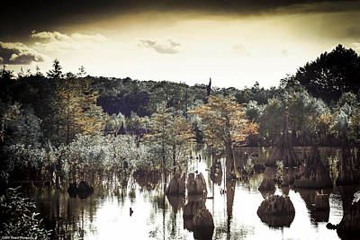 Photograph - Dead Lakes Grunge Style by Debra Forand