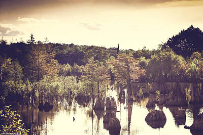 Photograph - Dead Lakes With A Vintage Twist  by Debra Forand