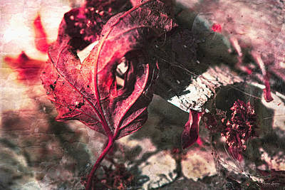 Photograph - Dead Leaf And Cobwebs by Anna Louise