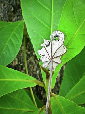 Dead Leaf Live Leaf Art Print