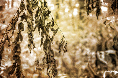Photograph - Dead Leaves by Michael Colgate