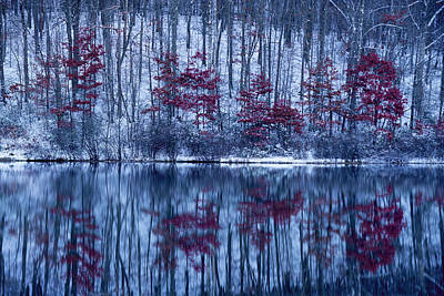 Photograph - Dead Leaves On Trees In Winter Along Water by Dan Friend