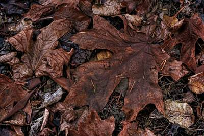 Photograph - Dead Leaves by Tyra OBryant