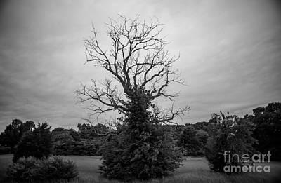 Black And White Photograph - Dead Live Oak by Art K