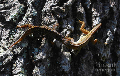 Brown Anole Photograph - Dead Locked by David Lee Thompson