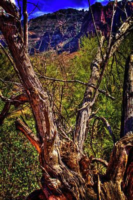 Photograph - Dead Mesquite Guarding The Trail by Roger Passman