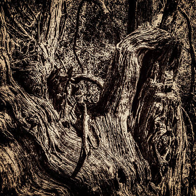 Photograph - Dead Mesquite Returning To The Earth by Roger Passman