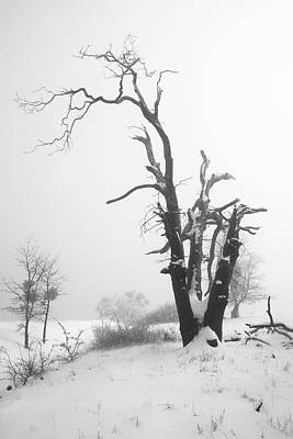 Photograph - Dead Oak In Snow by Alexander Kunz