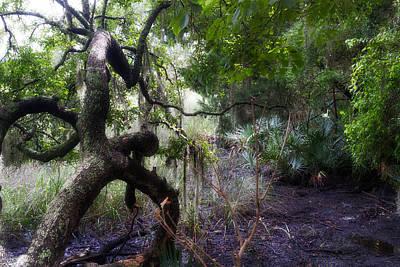 Custom Photograph - Dead Oak Tree  by J Darrell Hutto