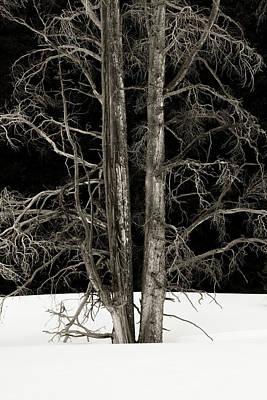 Photograph - Dead Of Winter by Scott Wheeler
