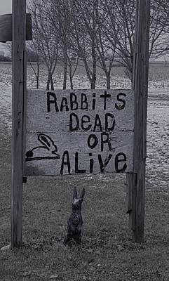Photograph - Dead Or Alive Ohio Rabbits B W  by Rob Hans