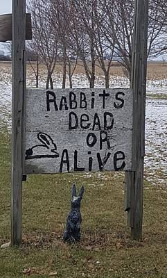 Photograph - Dead Or Alive Ohio Rabbits by Rob Hans
