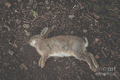 R.i.p Photograph - Dead Rabbit by Patricia Hofmeester