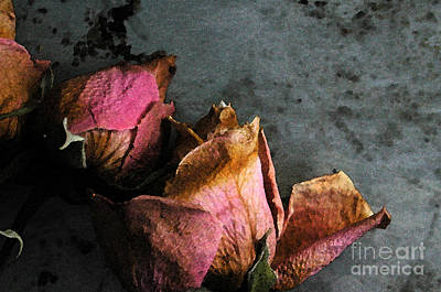 Photograph - Dead Roses 1 by Kathi Shotwell