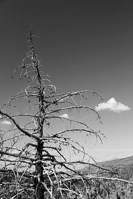 Photograph - Dead Tree And Cloud Bw by Mary Bedy